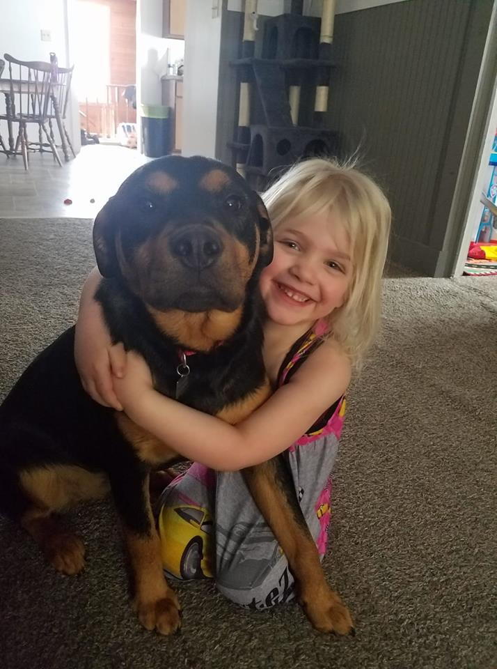 labrottie mix, gentle family dog