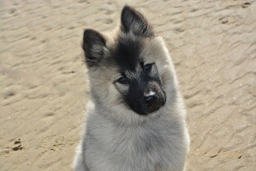 Female dog names #GermanShepherds #Irish #Hunting #Hippie #White #Best #Strong #Spanish #2019 #Golden Retriever #Goldendoodle #Big #Rare #Trendy #Sassy #OneSyllable #Nature #Alcohol #Brown #Flower #Little #Top #Cutest #Greek #French #Husky #Fluffy