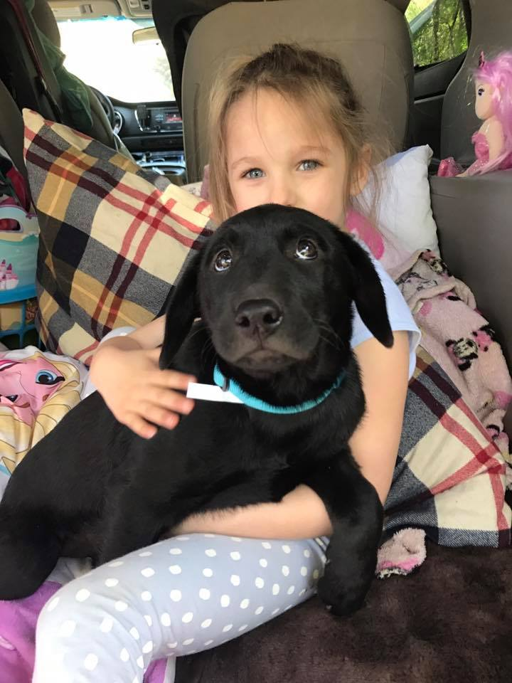 labrottie puppy, family dog