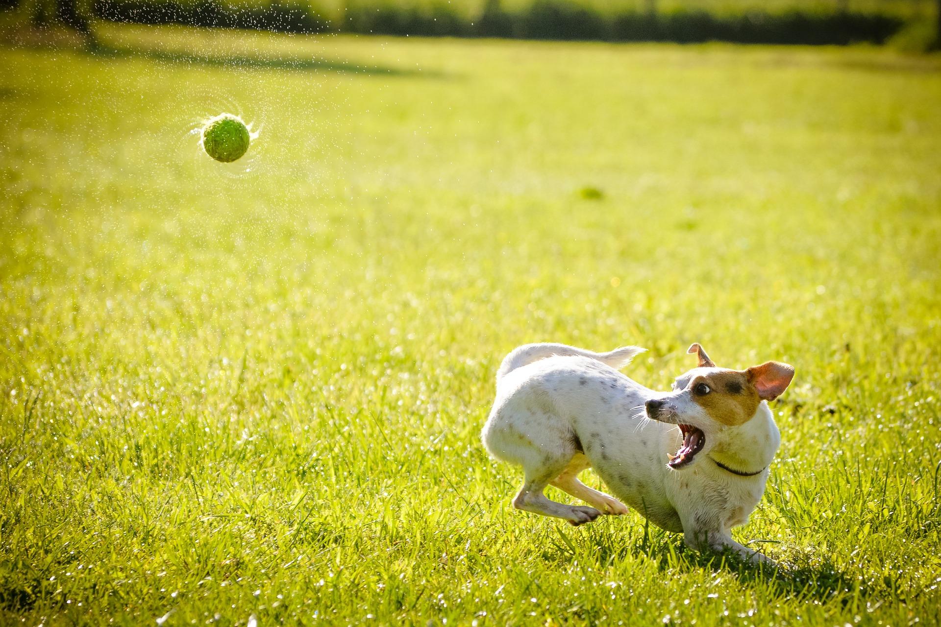 Boy Dog Names A-Z | Labrottie com