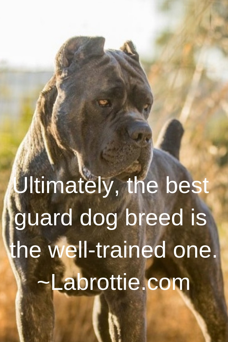 Best Guard Dog Breeds #GuardDogs #Breeds #Best #Scary #Tibetan Mastiff #Training #Family #GermanShepherd #GreatPyrenees #Big #Doberman #Pitbull #Rottweiler #Names #ForWomen #Webtoon #CaneCorso #DobermanPinscher #Awesome #Beautiful #Website #Articles #Pictures #BelgianMalinois #Tips #Posts #Home #World