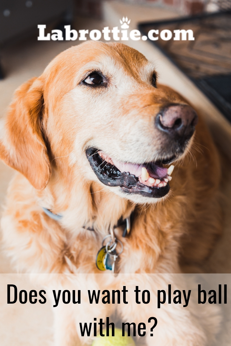 Dog Memes Tips Pt 1