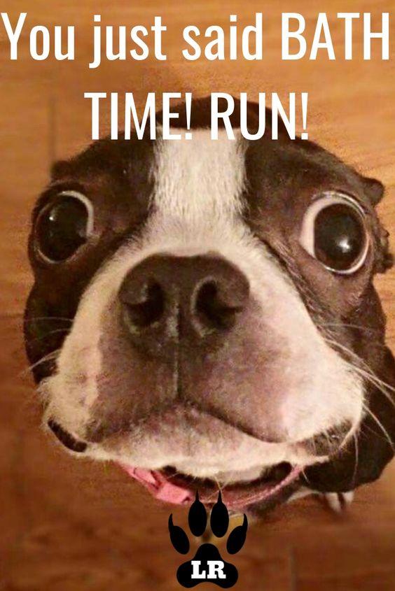 Dog Memes & Tips #boxer #fat #jokes #poop #tumblr #pun #dogmemes #goldenretriever #snapchat #forkids #lol #food #corgi #2018 #goodboy #pug #ugly #2019 #face #life #bed #christmas #video #work #human #thoughts #relationships #doggies #evil #heck