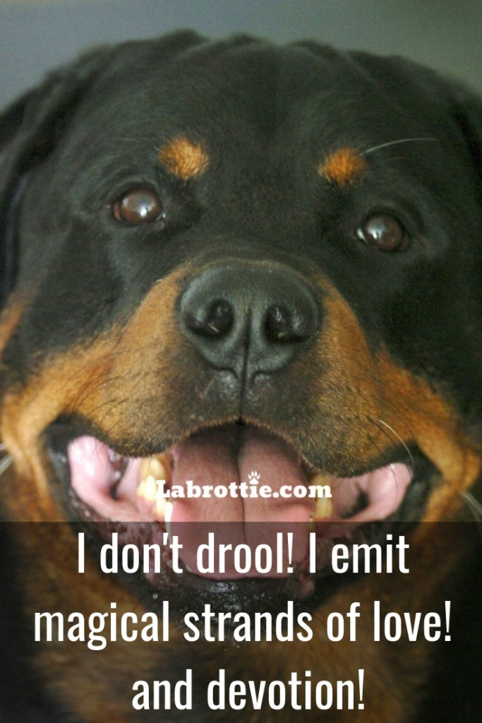 Dog Memes & Tips #twitter #reaction #feelings #best #relatable #baby #labrador #text #cartoon #missyou #lazy #friends #ideas #sleeping #guys #girls #gurls #monday #phteven #big #laughing #birthday #new #frenchbulldogs #rotties #vet #barking #friday #smile #moonmoon #yorkie #pictures