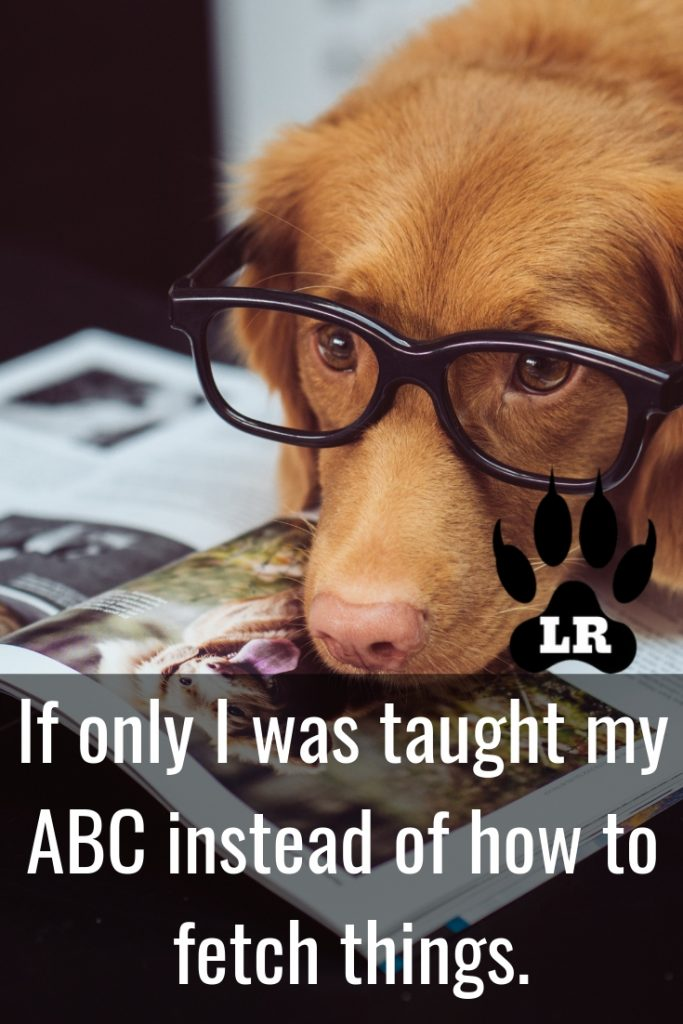 Dog Memes And Tips #twitter #reaction #feelings #best #relatable #baby #labrador #text #cartoon #missyou #lazy #friends #ideas #sleeping #guys #girls #gurls #monday #phteven #big #laughing #birthday #new #frenchbulldogs #rotties #vet #barking #friday #smile #moonmoon #yorkie #pictures