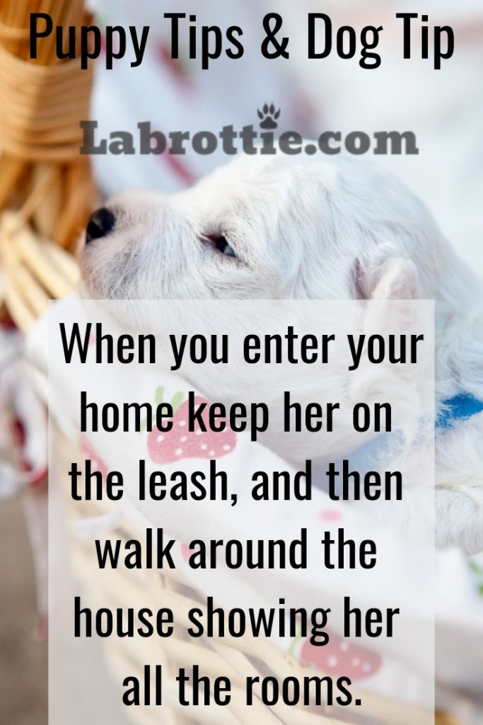 Dog Memes & Tips #life #truth #pets #hilarious #socute #germanshepherds #puppys #humor #funny #laughing Doggies #animalpictures #faces #cats #love #cute #funniest #husky #bork #2019 #lab #lmfao #truths #pitbull #chihuahua #puppies #sad #stupid #clean #weiner #dank