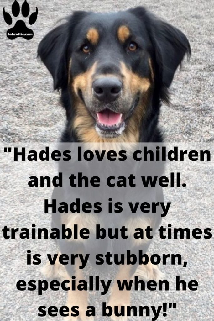 Rottweiler facts #puppy #funny #german #rottweilers #facts #names #Training #mix #quotes #photography #tattoo #Memes #Art #american #Albino #attack #big #withtail #Care #cute #aesthetic #husky #signs #dog #drawing #andkids #tips #female #clothes #scary #pitbull #forsale #collar #mean #painting #wallpaper #lab #dobermancross