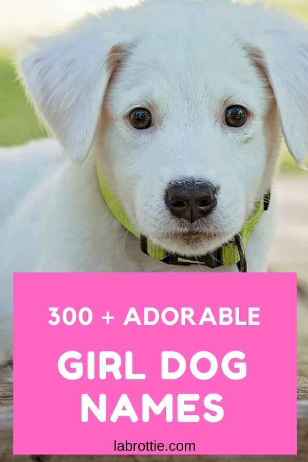 310 Girl Dog Names A Z Labrottie Com