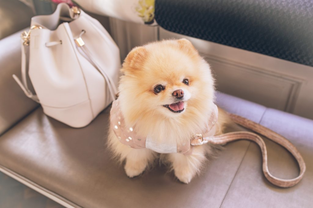 Fluffy dog names #White #Cute #Big #Small #Pets