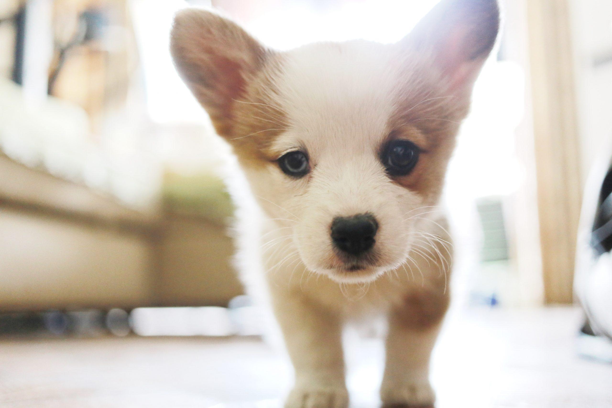 120 Cute Dog Names Labrottie Com